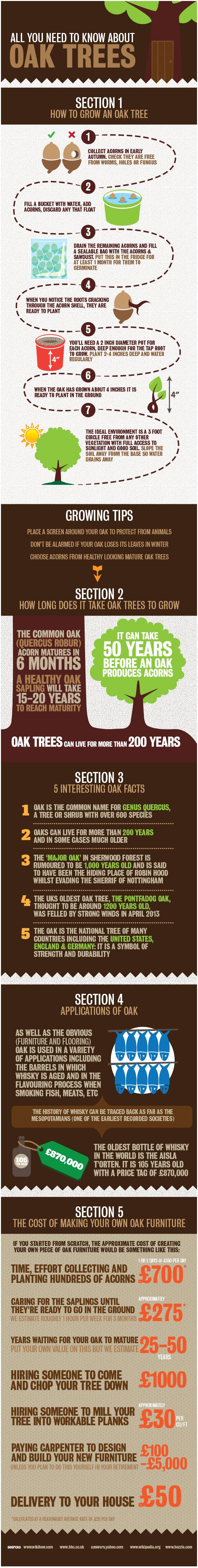 All you need to know about Oak trees